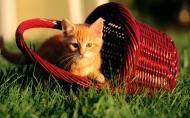 趣味猫咪图片(30张)
