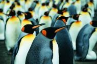 高清企鹅特写图片(16张)