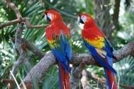 色彩斑斓的五彩金刚鹦鹉图片(15张)
