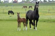 母马和马驹图片(19张)