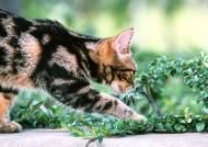 草地玩耍猫咪图片(18张)