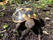 乌龟图片(8张)