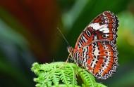 漂亮的蝴蝶图片(9张)