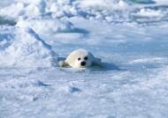 海豹图片(34张)
