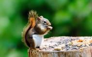 可爱的松鼠图片(30张)