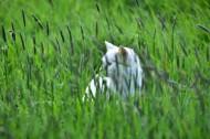 侧脸张望的猫咪图片(10张)