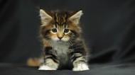 三花猫图片(6张)
