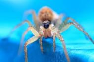 蜘蛛微距图片(10张)