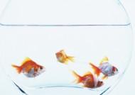 高清金鱼图片(26张)