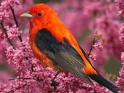 可爱小鸟图片(20张)