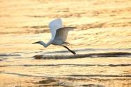 白鹭图片(10张)