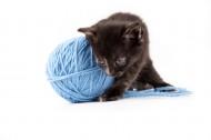 玩毛线团的猫咪图片(14张)