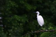 树上的白鹭图片(10张)