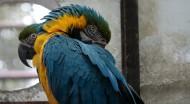 淘气的鹦鹉图片(12张)