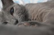 慵懒的猫咪图片(10张)