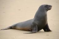 海狮高清图片(15张)