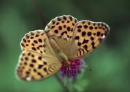 植物和昆虫图片(29张)