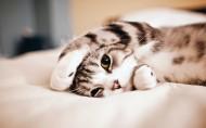 酣睡的猫咪图片(6张)