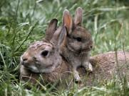 超萌的兔子图片(10张)