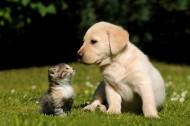 猫与狗的友谊图片(35张)