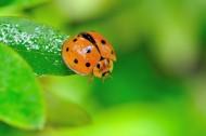 瓢虫图片(8张)
