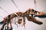 恐龙化石图片(13张)