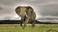 大象图片(6张)