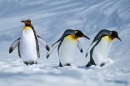 企鹅图片(9张)