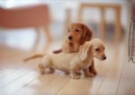 家庭可爱宠物狗图片(126张)