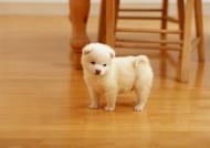 可爱小狗崽图片(14张)
