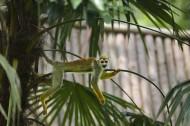 松鼠猴图片(11张)