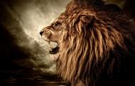 凶猛的狮子图片(11张)