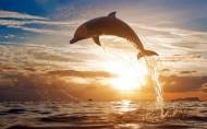 海豚图片(9张)