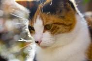 可爱猫咪图片(10张)