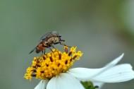 苍蝇图片(8张)