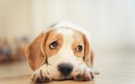 可爱狗狗图片(7张)