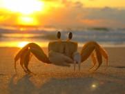 螃蟹图片(15张)