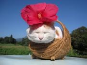超级憨态可爱的猫叔图片 第三辑(73张)