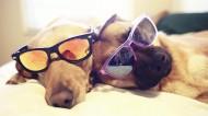 可爱狗狗图片(8张)