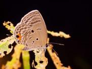 微距蝴蝶图片(13张)