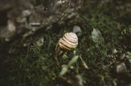 可爱小巧的蜗牛图片(9张)