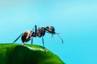 蚂蚁微距图片(9张)