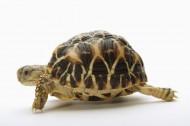 小乌龟图片(6张)