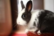 软萌可爱的兔子图片(10张)