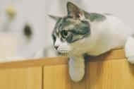 可爱顽皮的猫咪图片(6张)