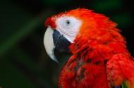 美丽的金刚鹦鹉图片(9张)
