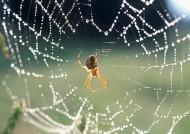 带露珠的蜘蛛网图片(13张)