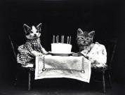 猫狗复古照图片(8张)