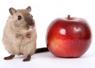 小巧可爱的仓鼠图片(15张)