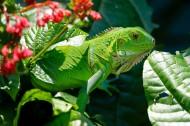 绿色蜥蜴图片(15张)